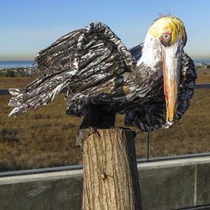 pelican_300x300